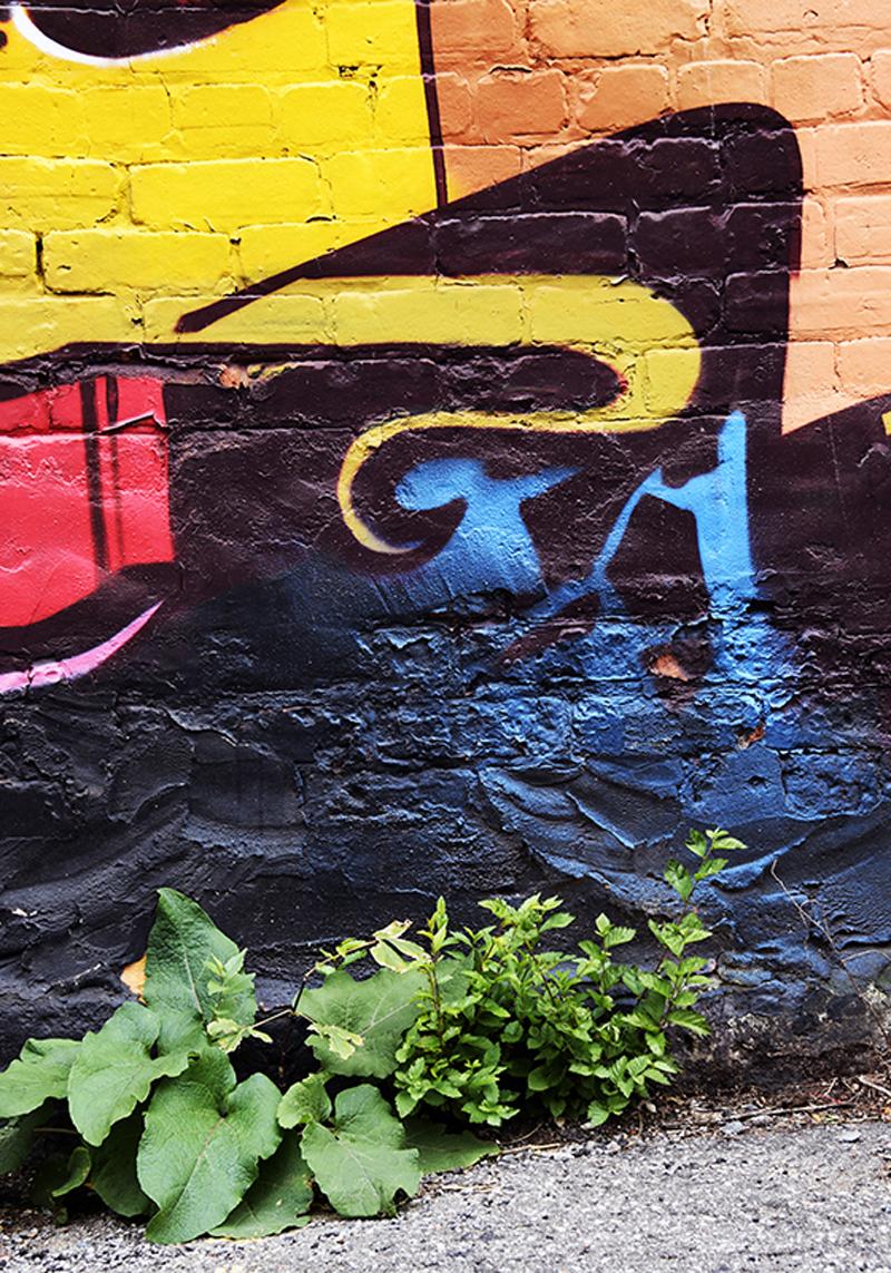 Natur'Elles Graffitis - Couleurs de la vie I - Photographies numérotées et signées 1/3 - impression sur papier de prestige Hahnemühle Fine Art Rag Bright White 310 g/m² - 70x100 cm - Caisse américaine